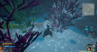 The High Seas / Sandbar Isle: Dive into the water just South of the palm trees.